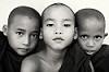 Buddhist novices, Myanmar (Burma)