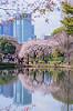 Sakura Shooting Party 新宿御苑の八重紅枝垂