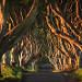 Ireland - The Dark Hedges