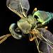 colores mágicos de un insecto mágico