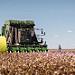 Cotton farming, Australia